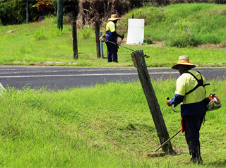 Men whipper snippering (photo courtesy of Queensland Corrective Services)