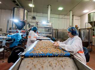 Staff working in peanut factory